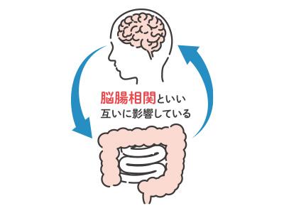 【POINT-2】第二の脳と言われるほど神経が集中し、脳やストレスとも密接に関係